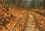 Tajemnicza jesienna droga na Roztoczu Środkowym - okolice Szewni
