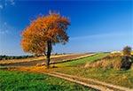 Droga na Roztoczu Środkowym - pola wsi Stanisławów