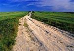Naturalna skalista droga - okolice wsi Niedzieliska