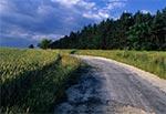 Droga z Łówczy w stronę - stan Narola przed renowacją ;)