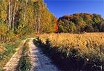 Droga w okolicy Feliksówki