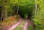 Okolice rezerwatu Pańska Dolina na Działach Grabowieckich to bardzo dobre miejsce do jazdy MTB