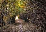 Ciekawa droga w tunelu z chaszczy, w rezerwacie Łaziska na Działach Grabowieckich