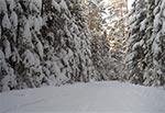Trakt Florianiecki Platynową Polską Zimą