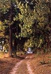 Droga przez park dworu w Udryczach - Skierbieszowski Park Krajobrazowy