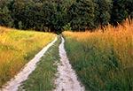Na Działach Grabowieckich - Udrycze Wola