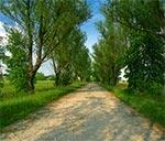 Wylot drogi z Puszczy Solskiej do Huty Różanieckiej