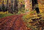 Droga w Roztoczańskim Parku Narodowym w okolicach Wojdy