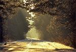 Poranek na roztoczańskiej drodze