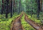 Droga w Puszczy Solskiej, gdzieś między Józefowem a Borowymi Młynami
