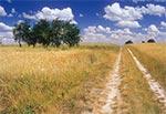 Lato na skraju Padołu Zamojskiego i Roztocza - między wsiami Hubale i Płoskie, a te drzewka po lewej to mirabelki