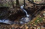 Potok Dublen na Roztoczu Wschodnim
