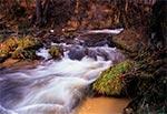 Potok Sopot w rezerwacie Czartowe Pole koło Hamerni