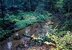 Potok Świerszcz w RPN