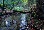 Potok Świerszcz w Roztoczańskim Parku Narodowym