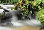 Potok Sopot