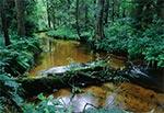 Potok Szum w Roztoczańskim Parku Narodowym