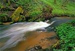 Potok Sopot w rezerwacie Czartowe Pole