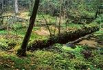 Potok Świerszcz