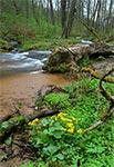 Potok Sopot koło Hamerni