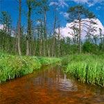Puszczański potok Paucza koło Stawów Koman - na zachód od Rudy Różanieckiej