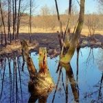 Przedwiosenne rozlewiska Wieprza między Obroczą a Rudką (Zwierzyniec)
