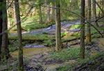 Potok Sopot w okolicy Hamerni