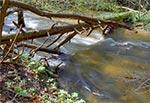 Potok Sopot w swej dolinie przełomowej, przecinającej krawędź Roztocza