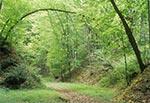 Wiosenne wąwozy Roztocza Zachodniego - Las Cetnar