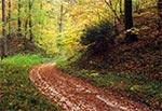 Wąwóz w Roztoczańskim Parku Narodowym - okolice Szewni Dolnej