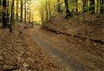Płytkie wcięcie erozyjne w Krasnobrodzkim Parku Krajobrazowym