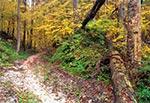 W Roztoczańskim Parku Narodowym - okolice Szewni