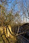 Częsty widok na zboczach wąwozów - zakrzywione drzewa. Krzywią się gdy grunt się osuwa, a drzewo próbuje zachować pion
