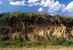 Ścianka płytkiego wcięcia wąwozowego na wierzchowinie - widoczne norki dzikich pszczół