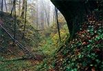 Wąwóz w Roztoczańskim Parku Narodowym - okolice Wojdy