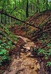 Wądół w Roztoczańskim Parku Narodowym - okolice Szewni