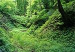 Wiosna w roztoczańskich wąwozach - Las Cetnar