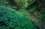 Lato w roztoczańskich wąwozach - wnętrze Roztocza Szczebrzeszyńskiego