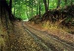 Lessowy wąwóz drogowy - wnętrze Roztocza Szczebrzeszyńskiego