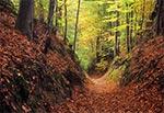 Wąwóz lessowy na Roztoczu Środkowym - Krasnobrodzki Park Krajobrazowy