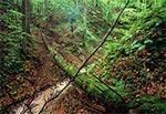 Wądół w Roztoczańskim Parku Narodowym - okolice Szewni Dolnej