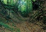W rezerwacie Cetnar