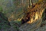 Lessowe wąwozy Roztocza - Las Cetnar