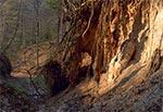 Lessowa ściana - Las Cetnar