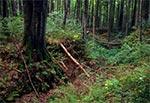 Płytkie wcięcie erozyjne w Roztoczańskim Parku Narodowym, w okolicach Szewni Dolnej