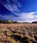 Dzikie pola Równiny Bełzkiej