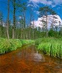 Puszczański potok Paucza