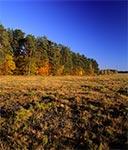 Łąki dawnej wsi Dahany