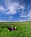Pastwisko na Działach Grabowieckich